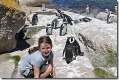 Boulder Beach South Africa Penguins