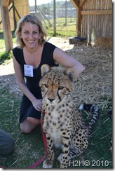 South Africa Petting a Cheetah