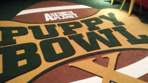 The Puppy Bowl Experience